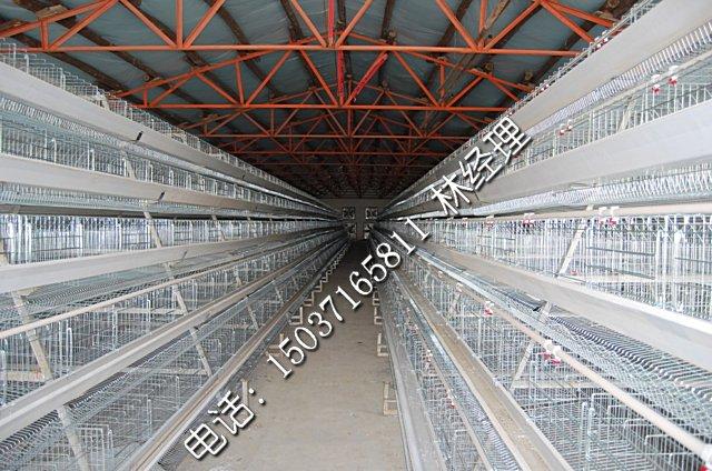 四层阶梯蛋鸡笼-河南金凤林聪四层阶梯蛋鸡笼养鸡设备